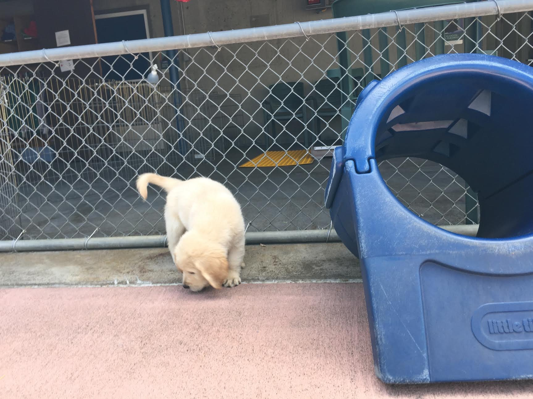 A Day in My Life: Puppy Playground at Guide Dogs for the