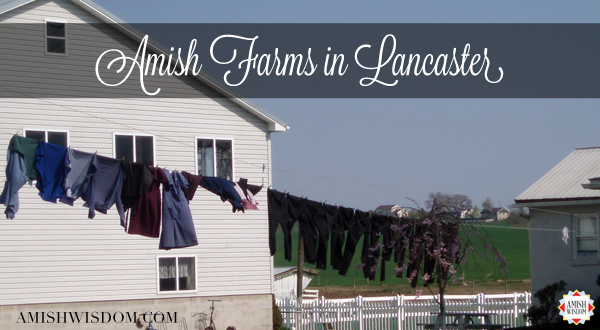 aw-tt-amish-farms-in-lancaster