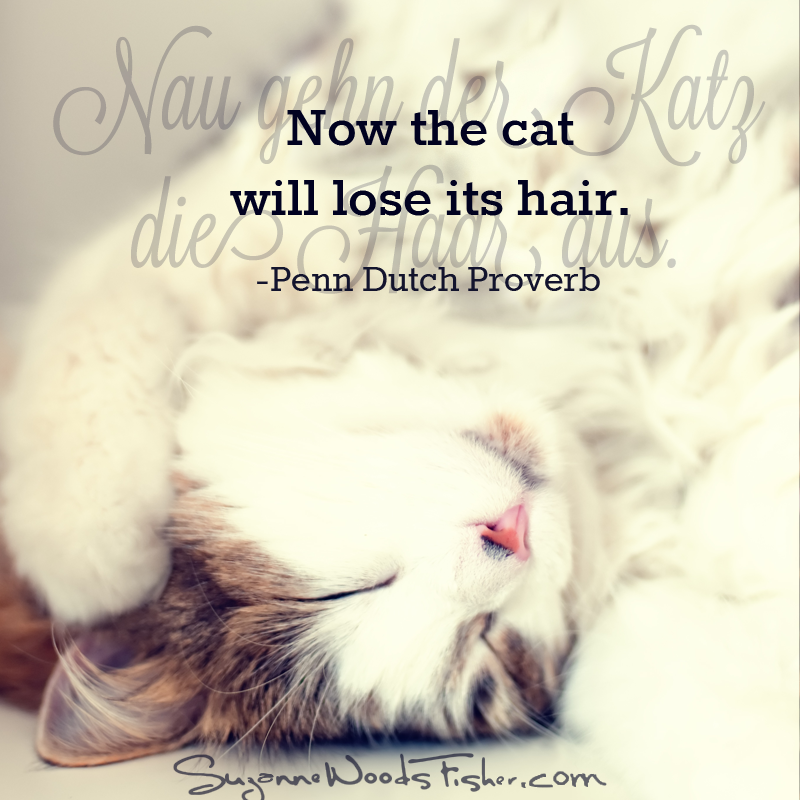 penn dutch proverb - cat