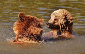 bear-1331989__340